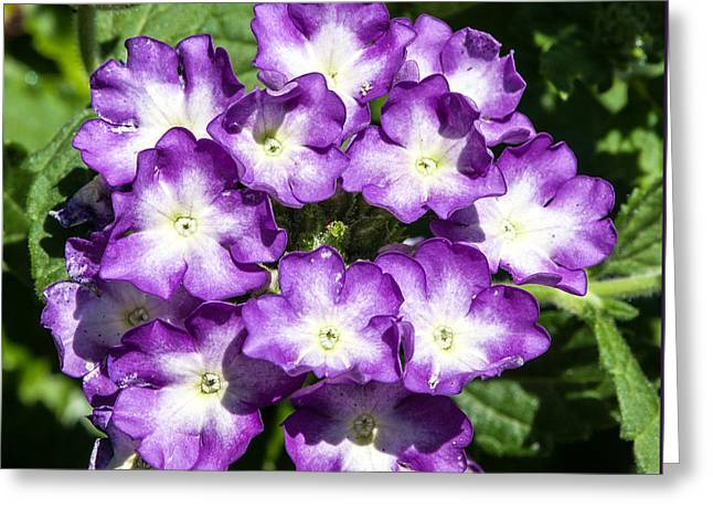 Purple And White Bouquet Greeting Card