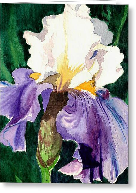 Flower Blossom Greeting Cards - Purple and White Iris Greeting Card by Janis Grau