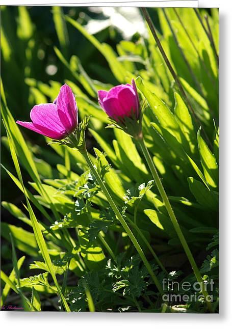 Purple Anemone Greeting Card by Arik Baltinester