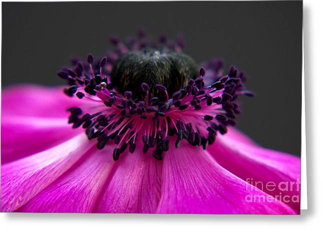Purple Anemone II Greeting Card by Angela Doelling AD DESIGN Photo and PhotoArt
