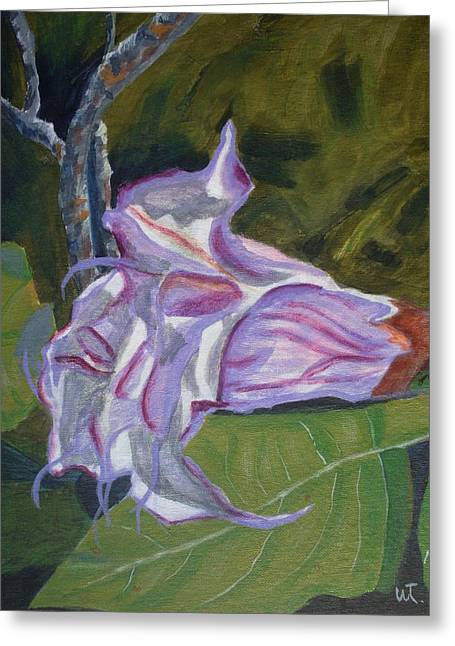 Purple Angel Trumpet- Datura Plant  Greeting Card