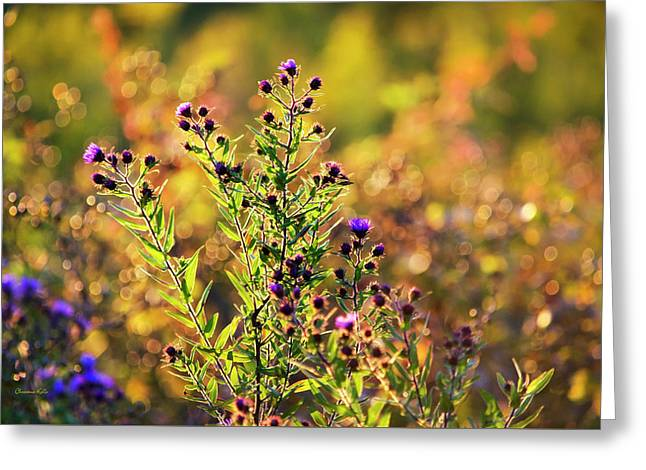 Purple Aster Flowers Greeting Card by Christina Rollo