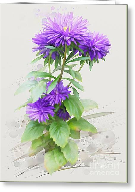 Purple Aster Greeting Card by Ivana