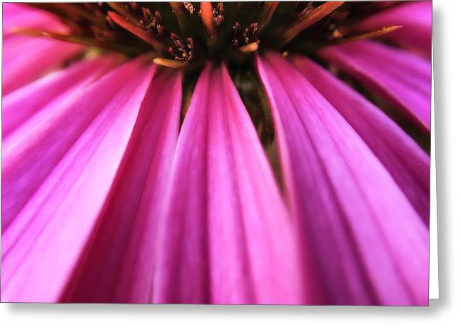 Greeting Card featuring the photograph Purple Beauty by Eduard Moldoveanu