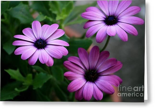 Purple Beauty Greeting Card by Valia Bradshaw