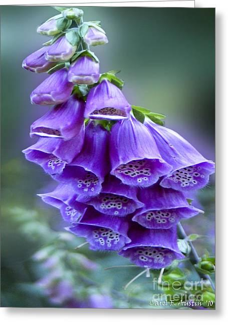 Purple Bell Flowers Foxglove Flowering Stalk Greeting Card
