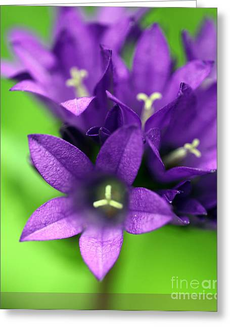 Purple Blooms Greeting Card by Amanda Barcon