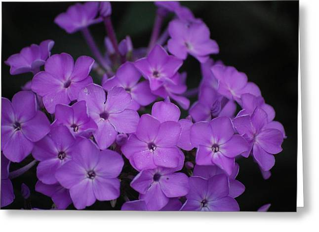 Purple Blossoms Greeting Card by David Lane