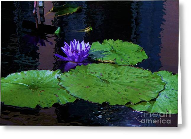 Purple Blue  Lily Greeting Card by Eric  Schiabor