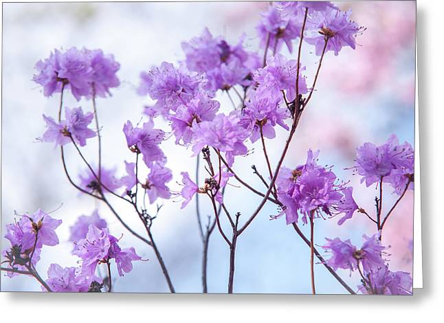 Greeting Card featuring the photograph Purple Blue Romance by Jenny Rainbow
