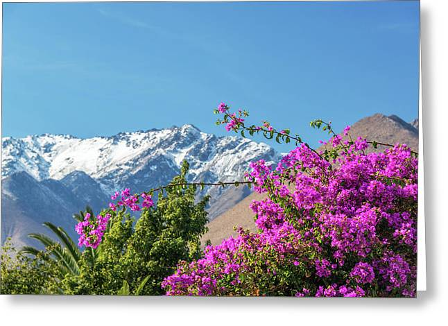 Purple Bougainvillea And Mountains Greeting Card by Jess Kraft
