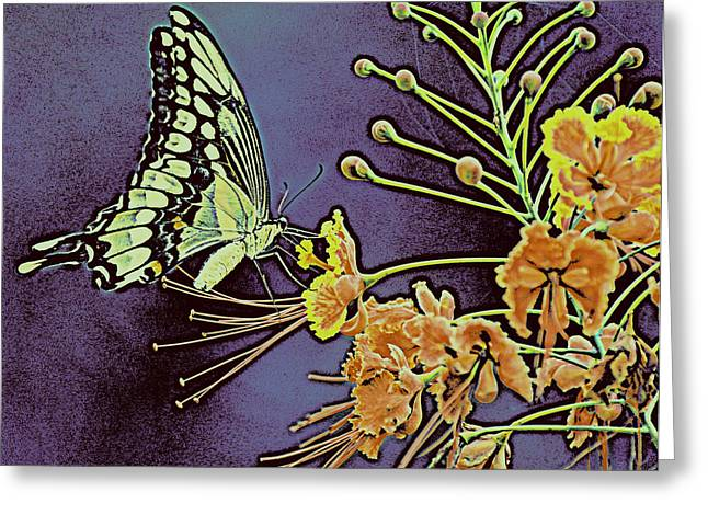 Purple Butterfly  Greeting Card by Rose  Hill