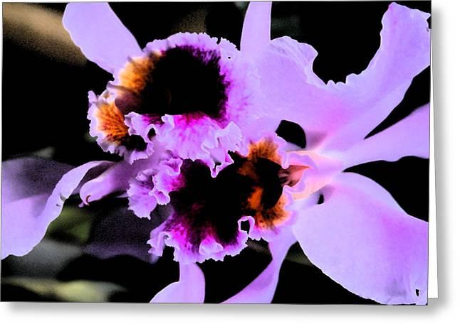 Purple Cattleya Orchid Greeting Card by Nanette Hert