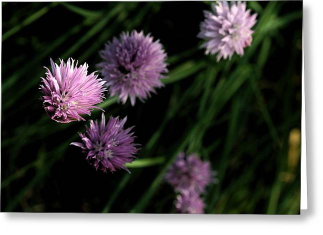 Greeting Card featuring the photograph Purple Chives by Angela Rath