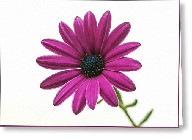 Purple Chrysanthemum Greeting Card