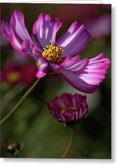 Greeting Card featuring the photograph Purple Coleus by Michael Flood