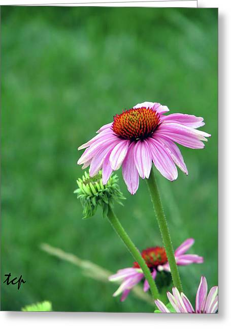 Greeting Card featuring the photograph Purple Cone by Traci Cottingham