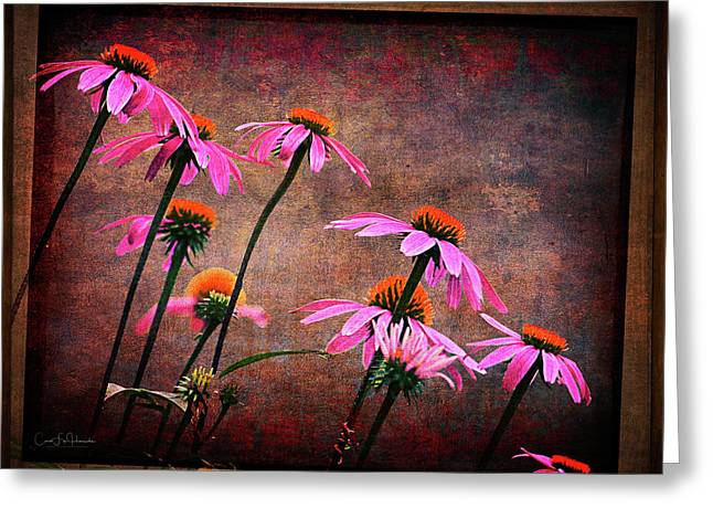 Purple Coneflowers Out Of Alignment  Greeting Card