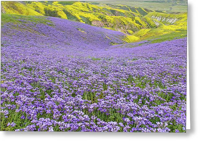 Greeting Card featuring the photograph Purple  Covered Hillside by Marc Crumpler