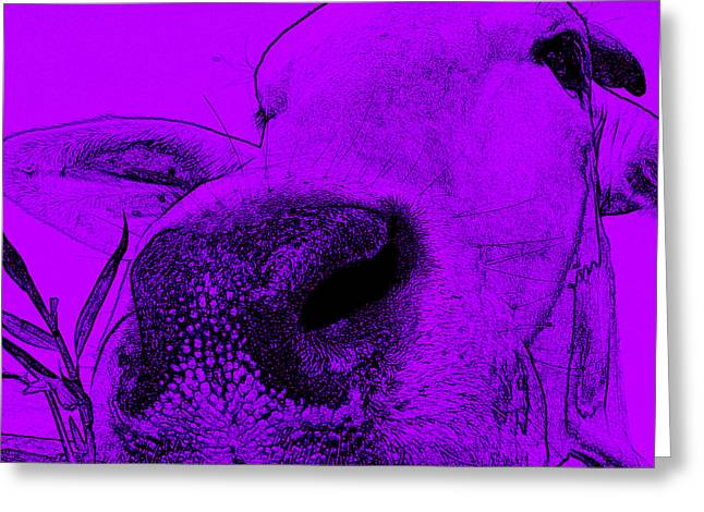 Purple Cow Greeting Card by  Judy Bernier