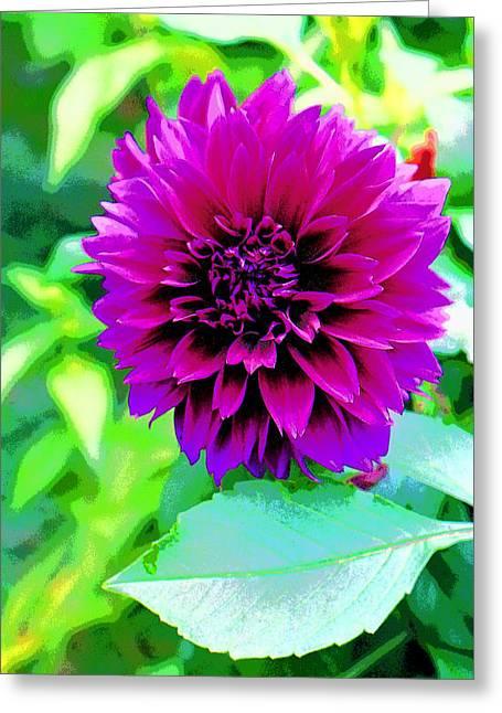 Purple Dahlia Image Greeting Card