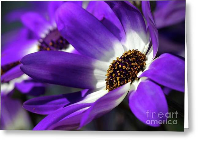 Purple Daisy Greeting Card by Sabrina L Ryan