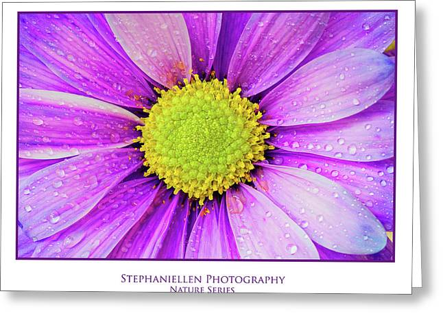 Purple Daisy Greeting Card by Stephanie Hayes