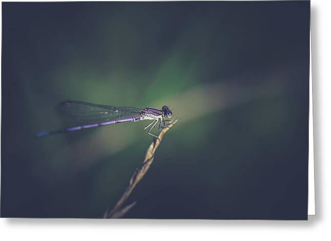 Greeting Card featuring the photograph Purple Damsel by Shane Holsclaw