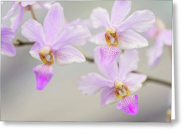 Purple Delight. Orchid Macro Greeting Card by Jenny Rainbow
