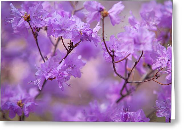 Greeting Card featuring the photograph Purple Delight. Spring Watercolors by Jenny Rainbow