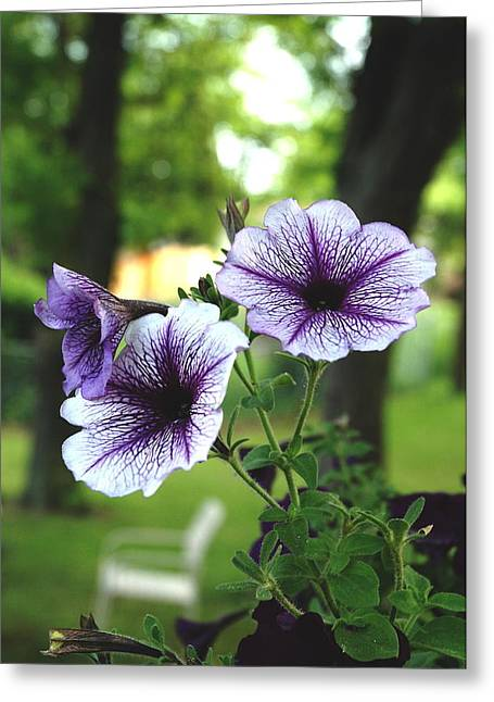 Purple Delights Greeting Card by Kicking Bear  Productions