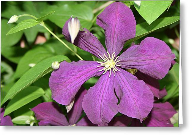 Purple Delite Greeting Card