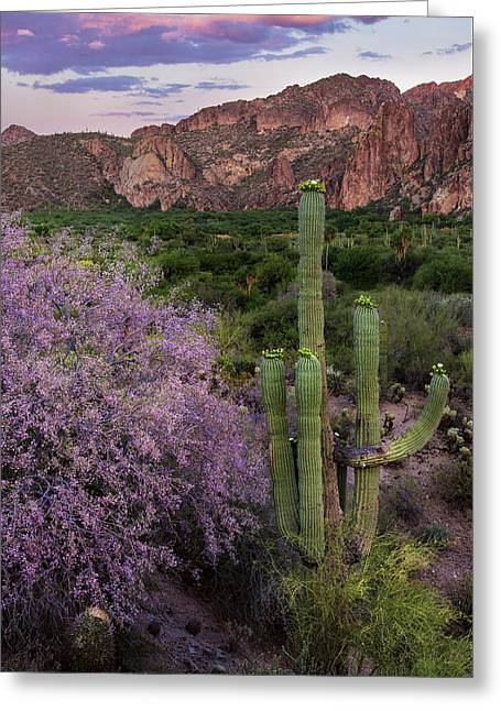 Purple Desert Beauty Greeting Card