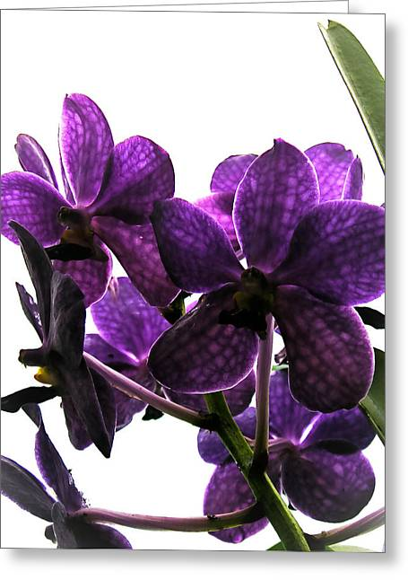 Purple Greeting Card by Dora Miller