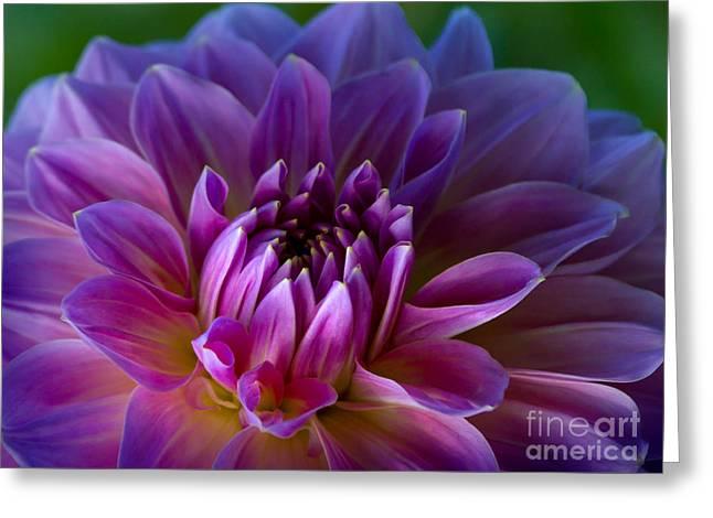 Purple Dream Greeting Card by Lutz Baar