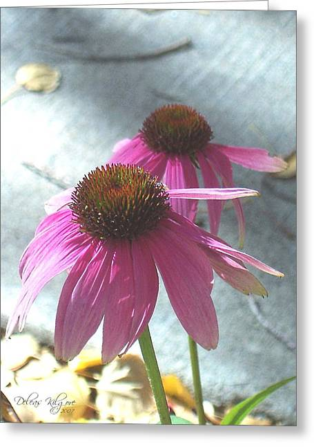 Purple Echinacea Greeting Card