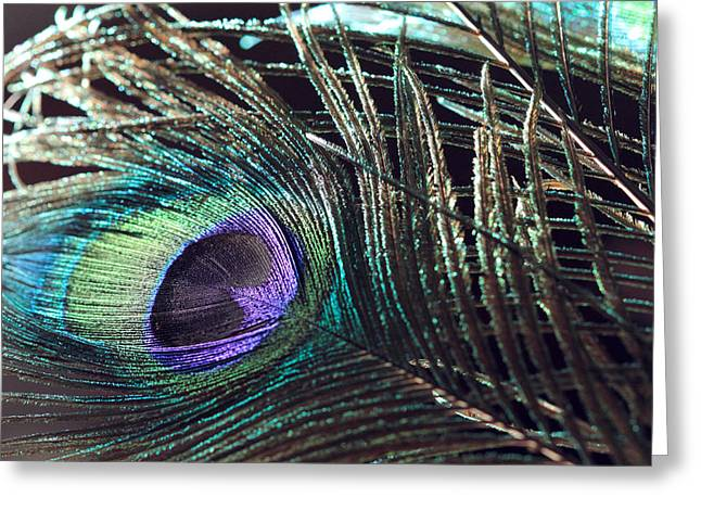 Purple Feather With Dark Background Greeting Card