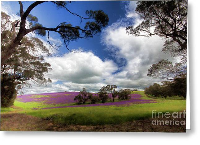 Greeting Card featuring the photograph Purple Fields by Douglas Barnard