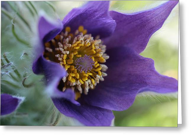 Purple Fleece Greeting Card