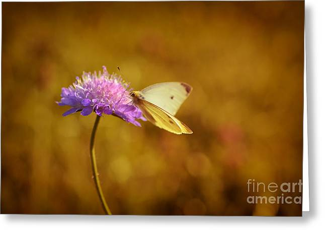 Purple Flower And Butterfly Greeting Card by Sabine Jacobs