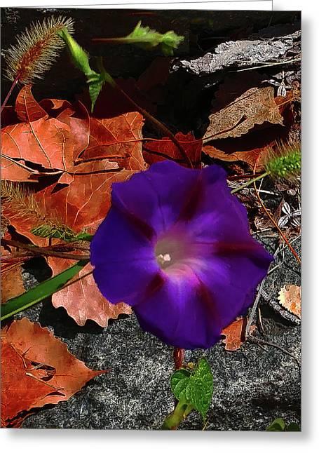Purple Flower Autumn Leaves Greeting Card