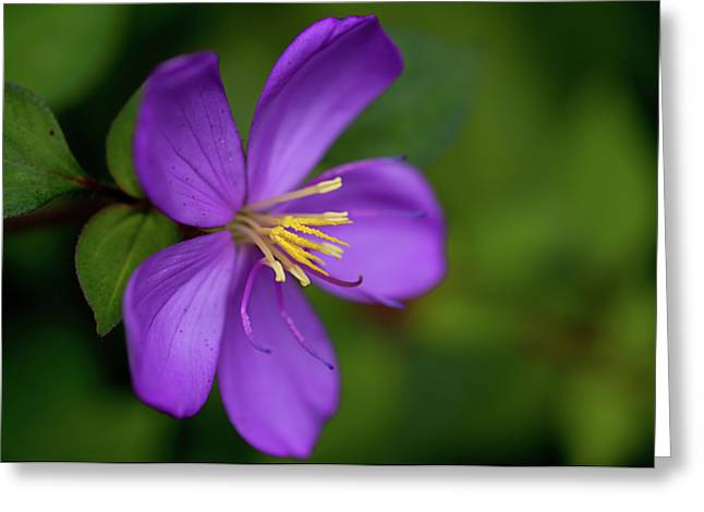 Purple Flower Macro Greeting Card