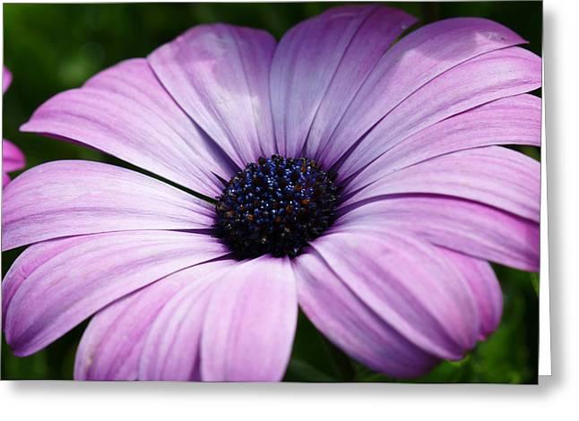 Purple Flower Macro Greeting Card by Edward Myers