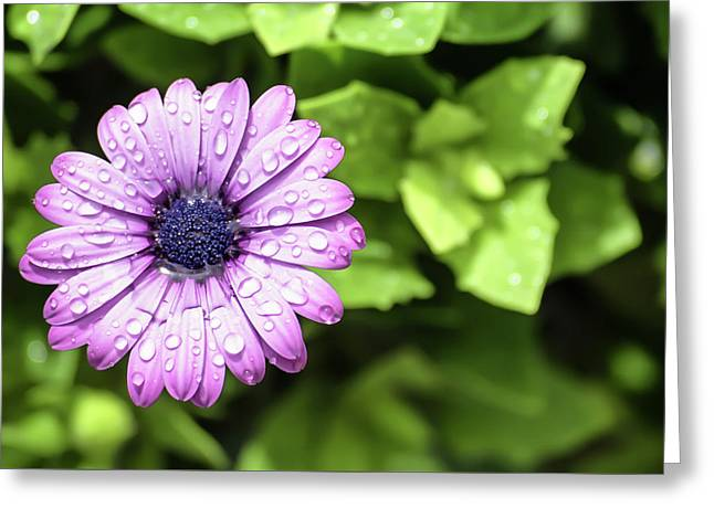 Purple Flower On Green Greeting Card