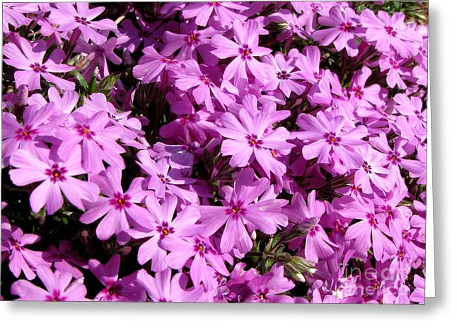 Purple Flower Power Greeting Card by Gardening Perfection