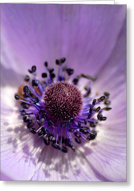 Purple Flower Universe Greeting Card by Pierre Leclerc Photography