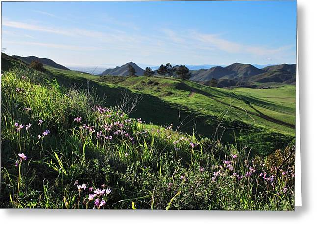 Greeting Card featuring the photograph Purple Flowers And Green Hills Landscape by Matt Harang