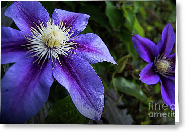 Greeting Card featuring the photograph Purple Flowers by Brian Jones