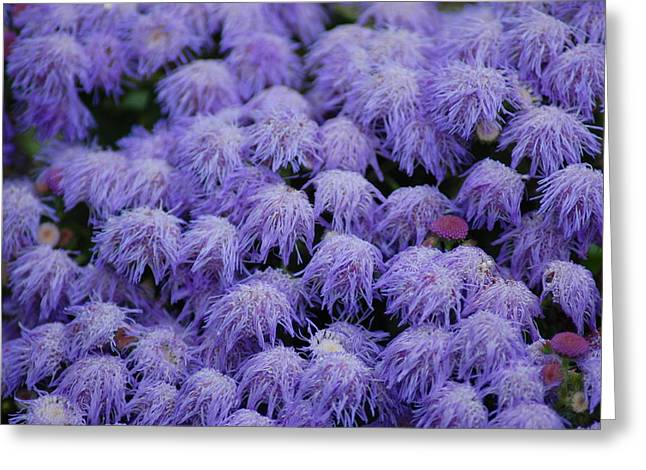 Greeting Card featuring the photograph Purple Flowers by Donna Bentley