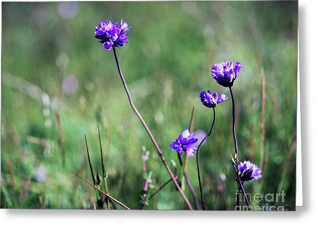 Greeting Card featuring the photograph Purple Flowers by Jim and Emily Bush